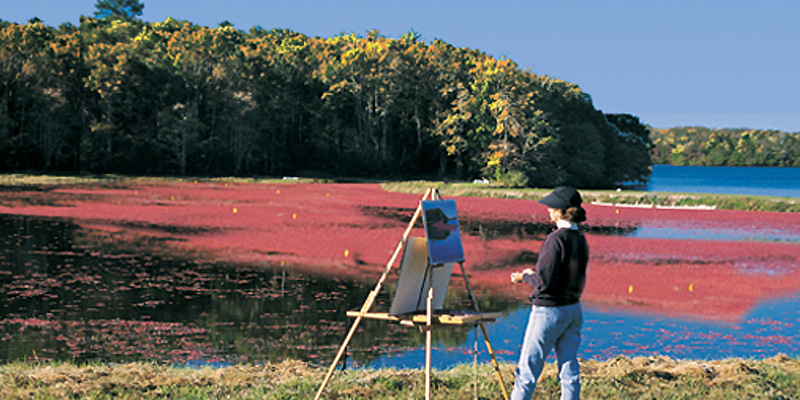 Cranberry Bogs on Cape Cod in the Fall